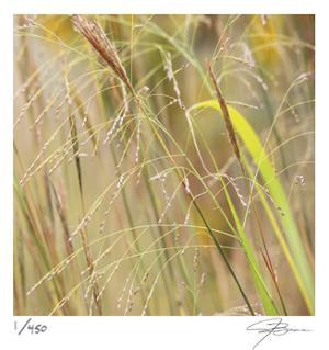 Grass 38 by Ken Bremer