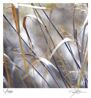 Grass 9 by Ken Bremer