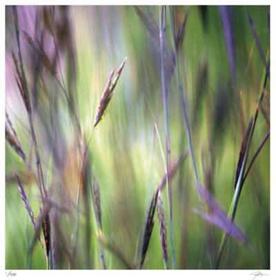 Grass Abstract 4 by Ken Bremer