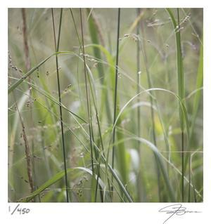 Grass Square 32 by Ken Bremer