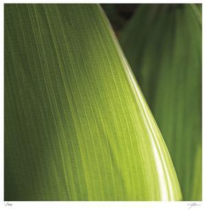 Palm Blades by Ken Bremer