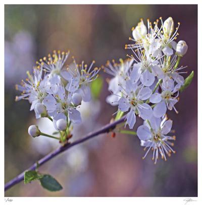 Spring Blooms by Ken Bremer
