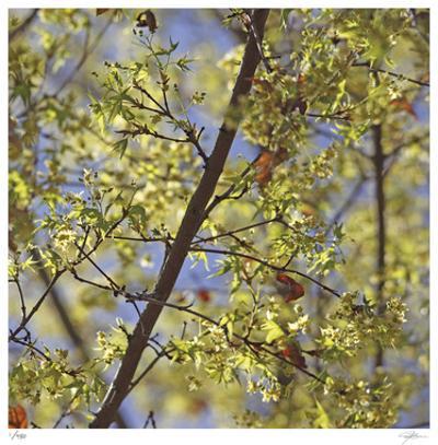 Spring Leaves 2 by Ken Bremer