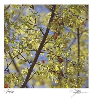 Spring Leaves 2 by Ken Bremer