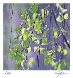 Spring Leaves by Ken Bremer