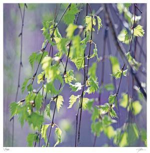 Spring Leaves by Ken Bremer