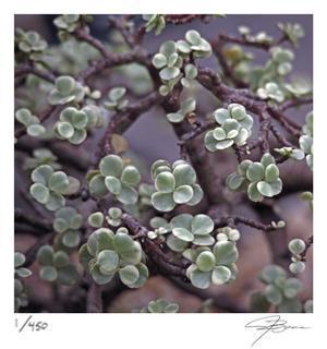 Succulent 13 by Ken Bremer