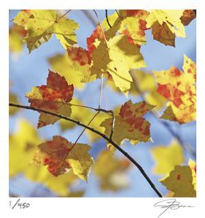 Yellow Oak Leaves by Ken Bremer