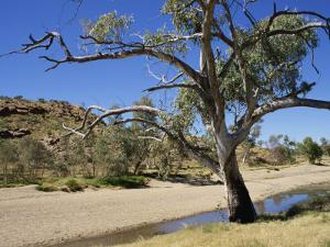 Dry Bed of Todd River, Alice Springs, Northern Territory, Australia, Pacific by Ken Gillham