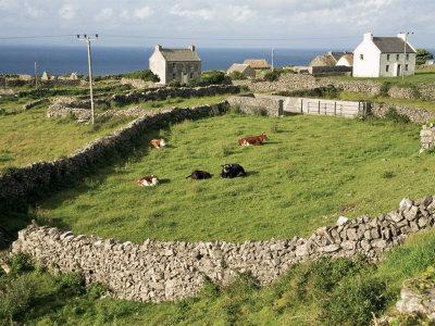 Walled Fields, Inishmore, Aran Islands, County Galway, Connacht, Eire (Republic of Ireland)