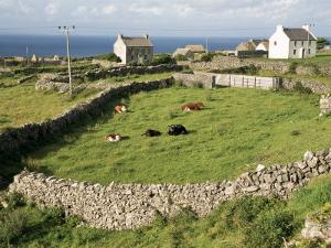 Walled Fields, Inishmore, Aran Islands, County Galway, Connacht, Eire (Republic of Ireland) by Ken Gillham
