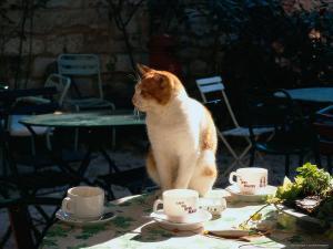 Cat on Table at a Cafe, Paris, FR by Ken Glaser