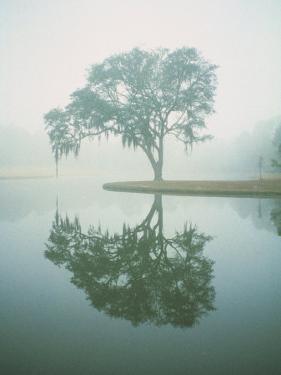 Louisiana, Oak Tree with Reflection by Ken Glaser