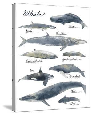 A Collection of Whales by Ken Hurd
