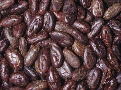 Raw, Whole Cacao Beans, the Source of Chocolate (Theobroma Cacao)Native to Tropical South America by Ken Lucas