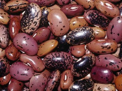 Variation in Scarlet Runner Beans (Phaseolus Coccineus), Native To Central America by Ken Lucas