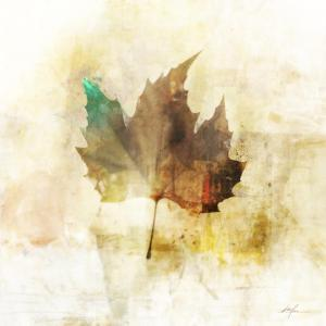 Falling Maple Leaf 1 by Ken Roko