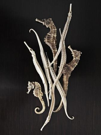 Dried Seahorses and Pipefish