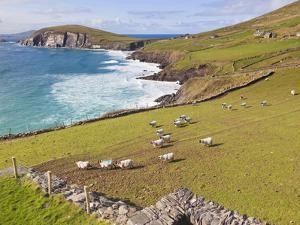 Near Slea Head, Dingle Peninsula, Ireland by Ken Welsh