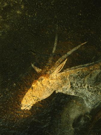 A San Mural Painting of an Eland, an Animal Sacred to the San by Kenneth Garrett