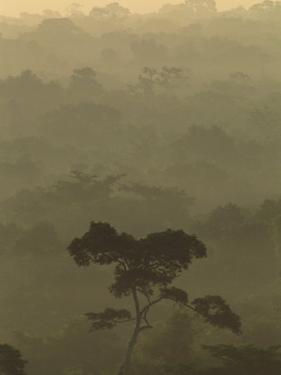 Fog over a Belize Rain Forest by Kenneth Garrett
