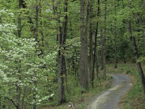 Path Cutting Through the Woods, Blue Ridge Mountains, Virginia by Kenneth Garrett