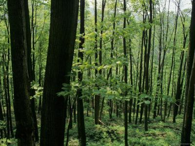 Scenic View of a Forest, Virginia by Kenneth Garrett
