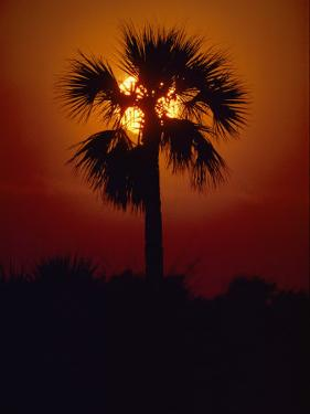 Silhouette of a Palm Tree Shot against a Setting Sun by Kenneth Garrett