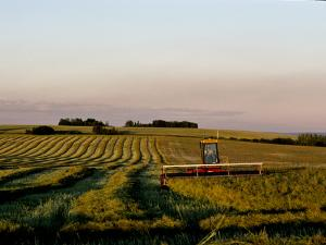A Farmer on a Combine Works into the Evening to Harvest Grain by Kenneth Ginn