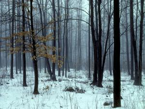 An Early Winter Forest Scene in Eastern Ontario by Kenneth Ginn