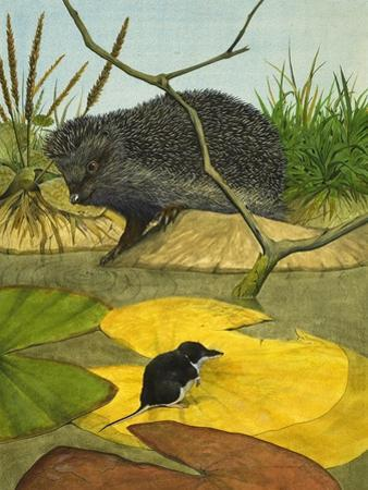 Water Shrew and Hedgehog, 1974 by Kenneth Lilly