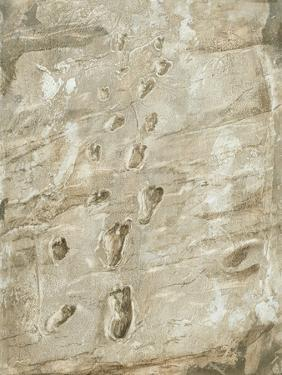 Laetoli Fossil Footprints by Kennis and Kennis