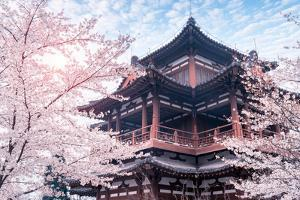 Cherry Blossom with Traditional Chinese Roof in Qing Long Temple,Xi An,China by kenny001