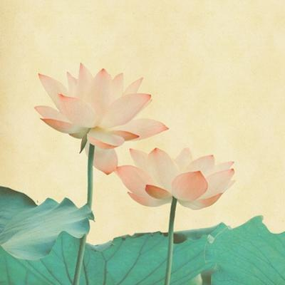 Lotus On The Old Grunge Paper Background by kenny001