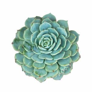 Miniature Succulent Plants by kenny001