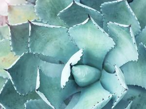 Sharp Pointed Agave Plant Leaves by kenny001