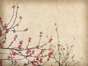 Spring Plum Blossom Blossom on Old Antique Vintage Paper Background by kenny001