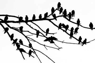 Silhouette of Birds Perched on the Branches of a Dead Tree Above the Occoquan River