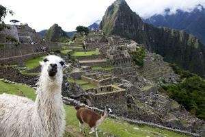 The Ruins At Machu Picchu and a Couple of Llamas by Kent Kobersteen