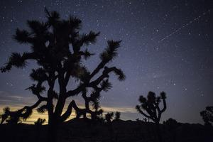 The Star-Filled Night Sky over Lost Horse Valley in Joshua Tree National Park by Kent Kobersteen
