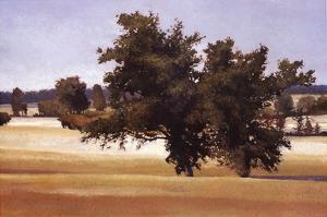 Montpellier Oak by Kent Lovelace