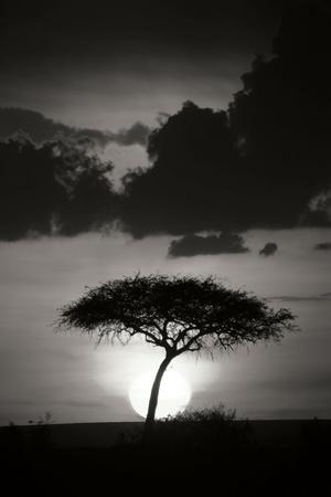 https://imgc.allpostersimages.com/img/posters/kenta-sunrise-bw_u-L-Q10PWEW0.jpg?p=0