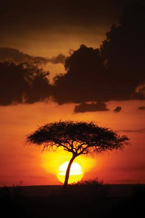 https://imgc.allpostersimages.com/img/posters/kenya-sunrise_u-L-Q10PRQQ0.jpg?p=0