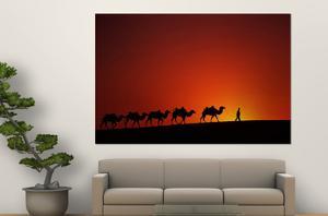 Camel Caravan at Sunrise, Silk Road, China by Keren Su