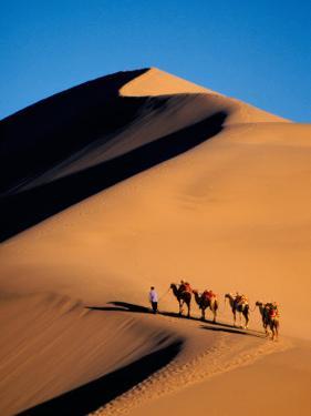 Camel Caravan at Sunset, Silk Road, China by Keren Su