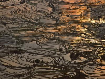 China, Yunnan Province, Yuanyang, Water Filled Rice Terrace at Sunset by Keren Su