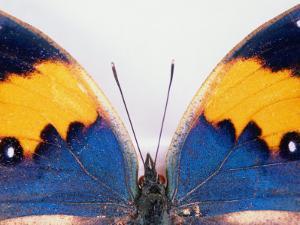Detail of a Butterfly Body and Wings, Wolong Ziran Baohuqu, China by Keren Su