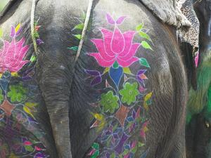 Elephant Decorated with Colorful Painting at Elephant Festival, Jaipur, Rajasthan, India by Keren Su