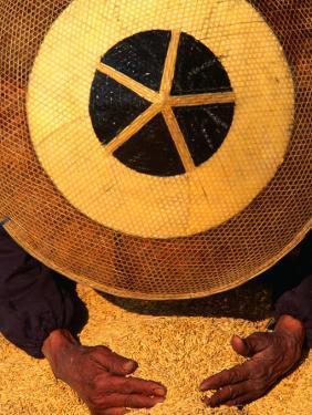 Farmer Wearing a Bamboo Hat Gathering Rice, Guizhou, China by Keren Su