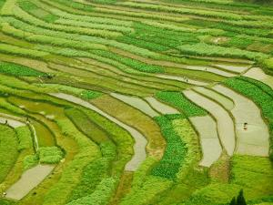 Farmland by the Three Gorges of the Yangtze River, China by Keren Su